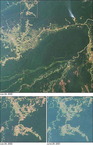 383px-Deforestacja_RioBranco