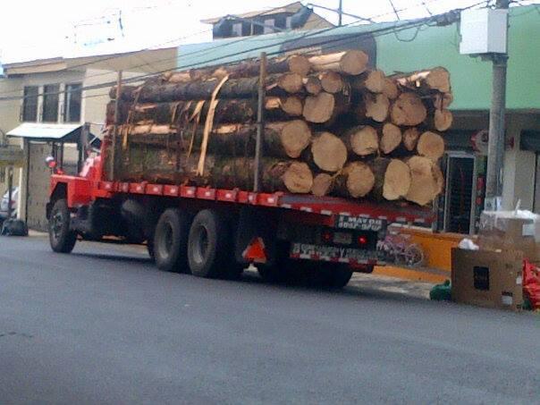 más árboles caídos